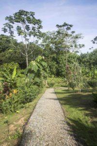 Path 2 copy